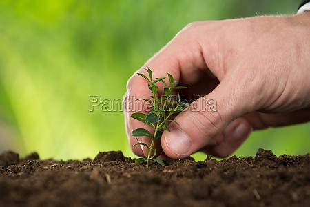 personenhand pflanzt kleinen baum