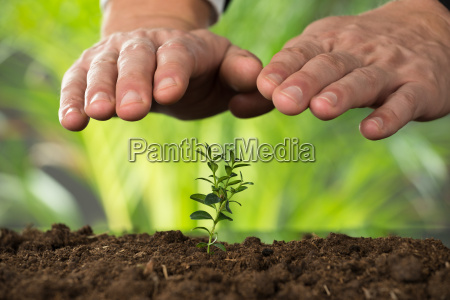 person hand protecting plant on land