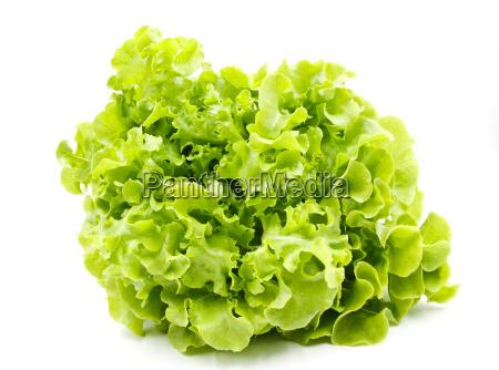 gruener eichensalat isoliert auf weissem hintergrund