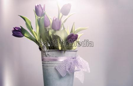 rosafarbene tulpen im retro eimer