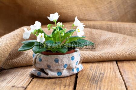 saintpaulia flowers in paper packagingon wooden