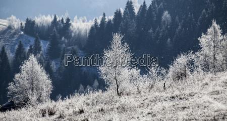 raureif bedeckt winterlandschaft