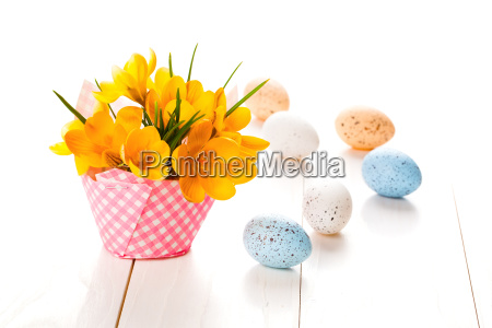 crocus flowers with eggs on a