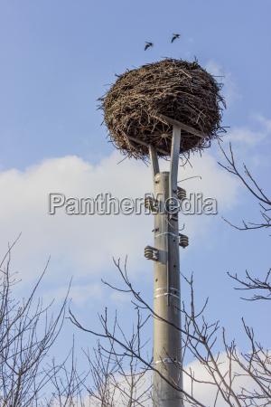 stork nest on a power pole