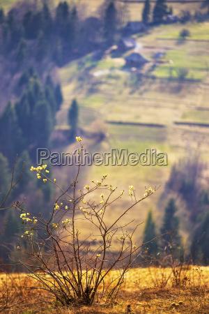bluehender baum sonniger fruehlingstag im bergdorf