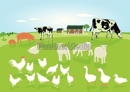 animals in agriculture