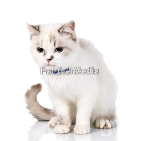 white cute cat on a