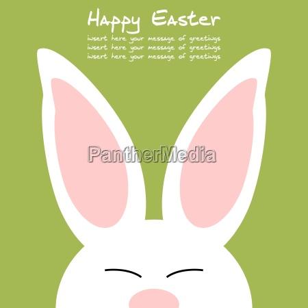 froehlicher und freundlich gefaerbter kaninchen hintergrund