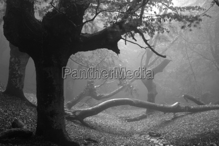 spanien baeume am naturpark urkiola