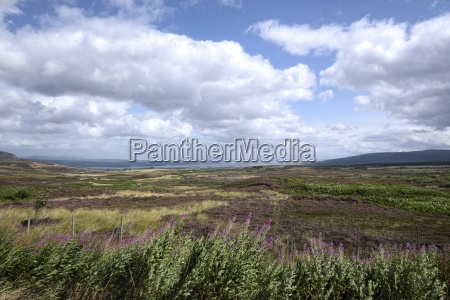 uk scotland view over heath landscape