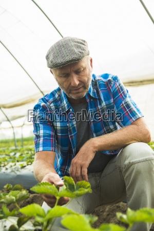 farmer controlling plants in a greenhouse