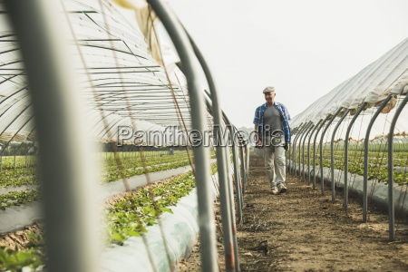 farmer looking at plants in greenhouse