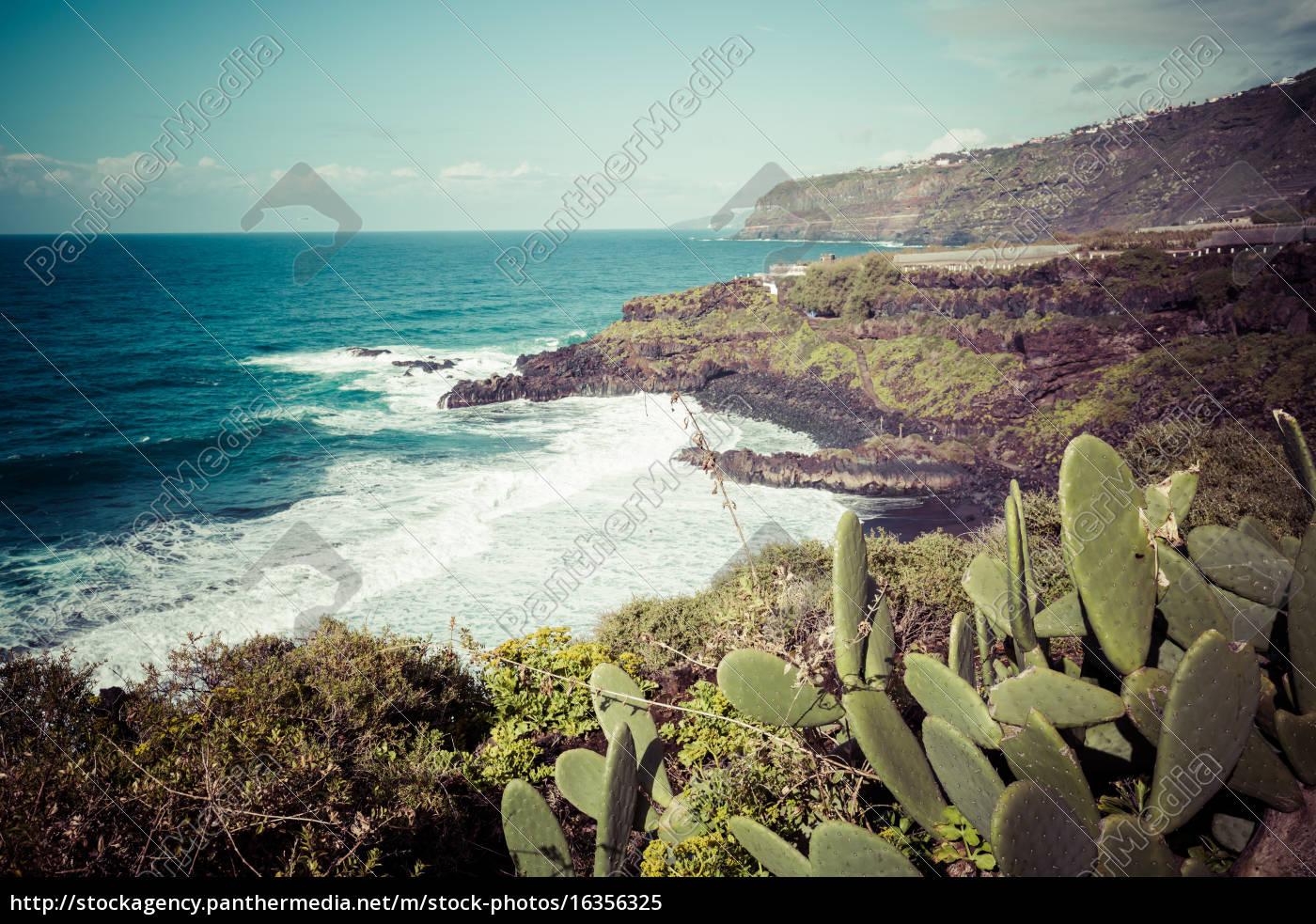 bananenplantage, auf, der, kanarischen, insel, teneriffa, spanien - 16356325