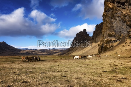 farbe berge pferd ross tier saeugetier