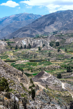 terrace farming in the canyon of