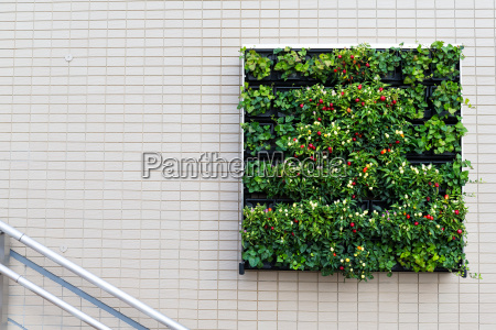 square green plants and flower on