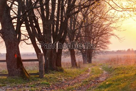 fruehlingslandschaft sonnenuntergang alte landstrasse in den