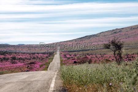 road through the flowering desert spanish