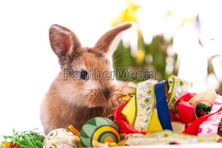 bunte kaninchen mit ostereier auf weissem