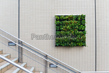 square plants and flower on the