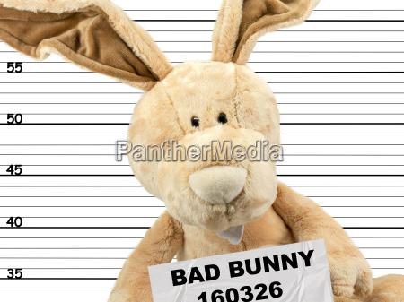 criminal bunny