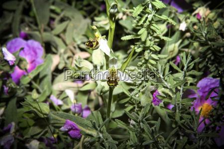 komposition closeup nahaufnahme blume pflanze gewaechs