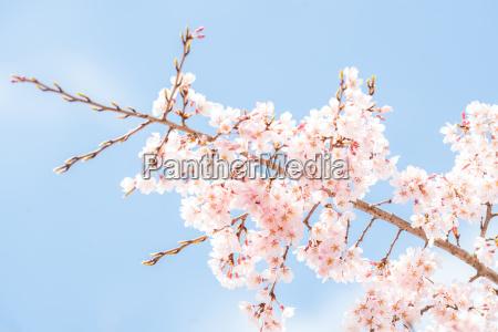 baum blume pflanze gewaechs bluete erbluehen