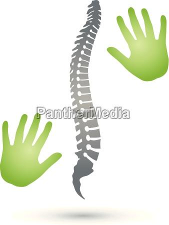 back spine orthopedics hands