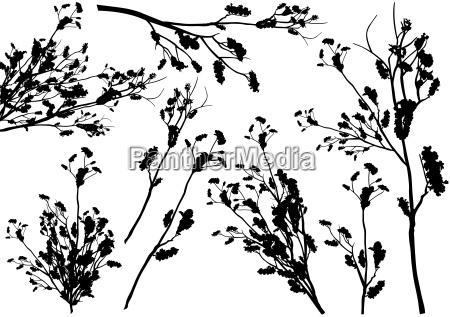 set von branch silhouetten