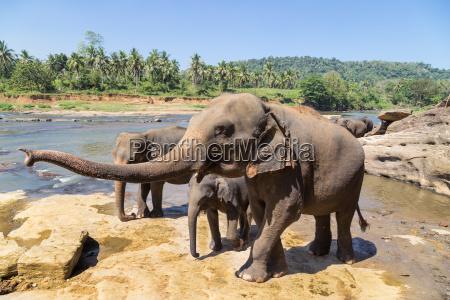 elefantenfamilie am fluss