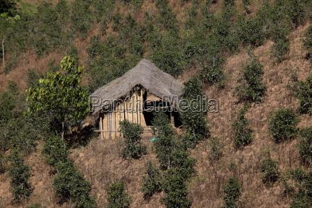 teeplantagen in myanmar