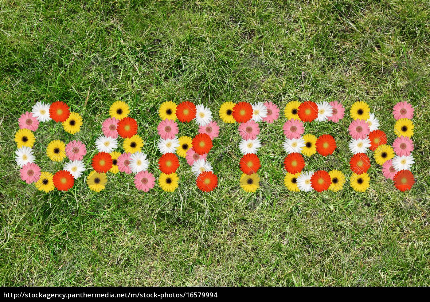 Garten Aus Blumen Blume Frühling Gras Wiese Rasen Stock Photo