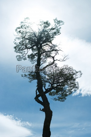 baum silhouette gegen den blauen himmel