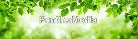 gruene blaetter und leuchtender panorama hintergrund