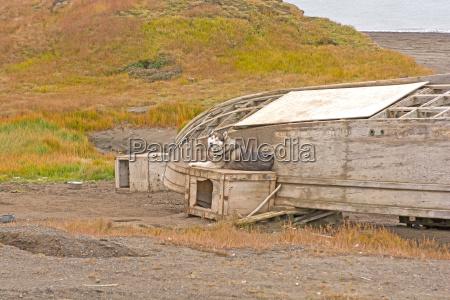 arktis tundra alaska arktisch laendlichen baeuerlich
