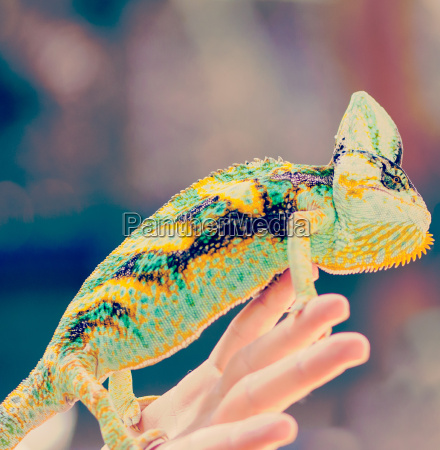 zumachen schliessen hand haende farbe tier