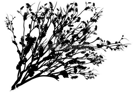 black shrub silhouette