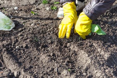 blatt baumblatt agrar garten bett boden
