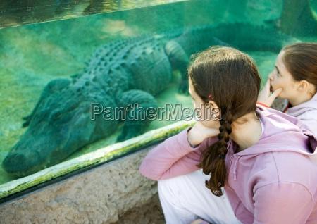 freundschaft freizeit aquarium tierpark blick blickend
