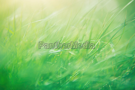 green grass abstract background