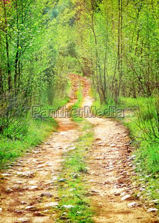 pathway in abgelegenen laubwald
