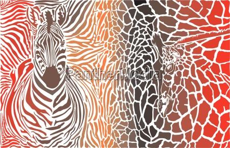 tier hintergrund von zebra und giraffe