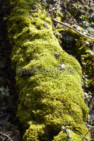 forest moss covered tree bole