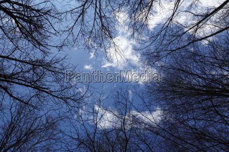 forest circular arranged treetops towards