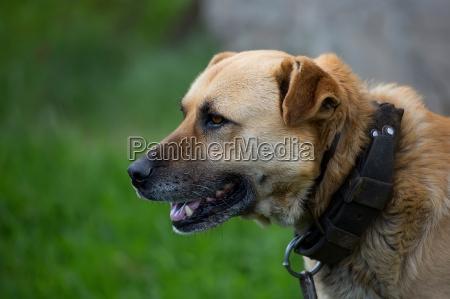 dog a portrait