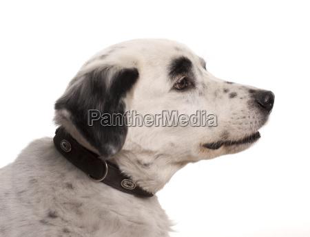 dog portrait in profile page