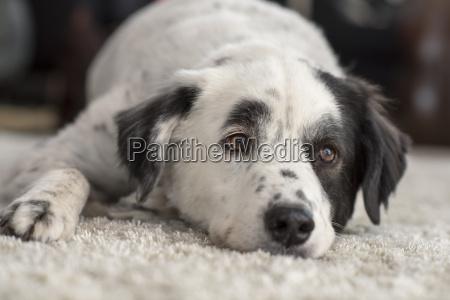 dreamy lie lying lies dog mongrel