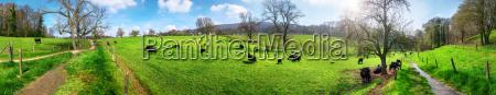 panorama mit laendlicher idylle kuehe weiden