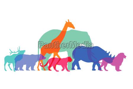 colored wild animals on white