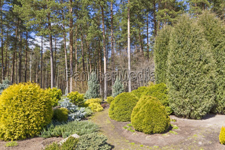 garden design with variety of conifer